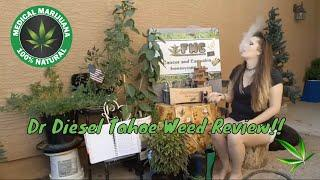 Dr Diesel Tahoe Concentrate Weed Review From Arizona Organix