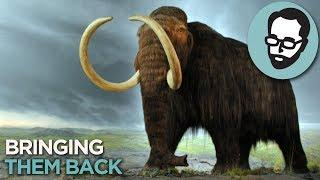 The Weird Plan To Fight Climate Change With Mammoths   Answers With Joe